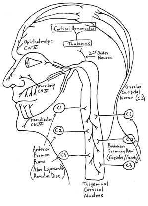 drawing illustrating how neural pathways are affected by chiropractic treatment of migraines