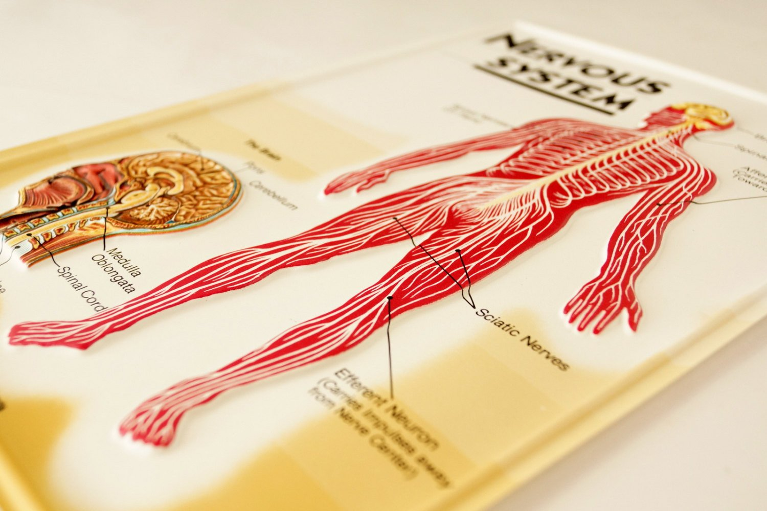 nerve_system_picture