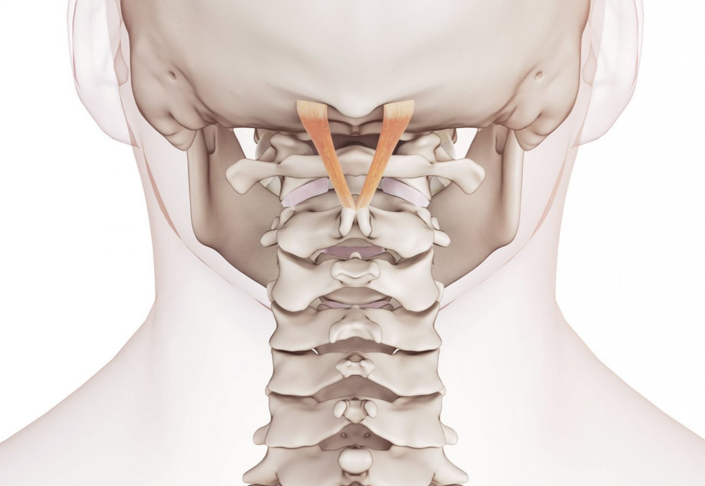 poterior_cervical_spine_picture_cropped.jpg